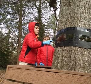 Christy's class - tree banding - Diego _ Jack