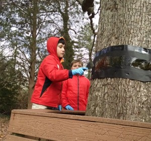 Christy's class - tree banding - Diego _ Jack