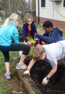 Curt's class - digging sweet potatoes (2)